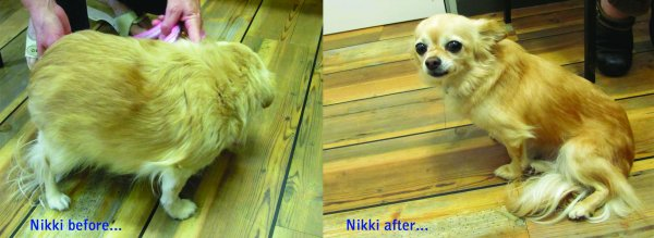 Nikki before after