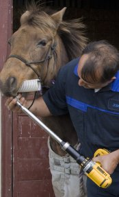 Horse dental care