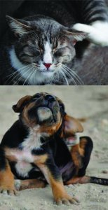 Allergies in your pets